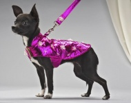 Dog Coats, Leashes and Collars