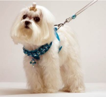 Turquoise Renaissance Harness<br />Harness and Leash sold separately