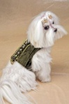 Olive Posh Harness