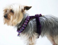 Plum Renaissance Harness