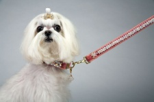 Pink Princess Luxe Leash