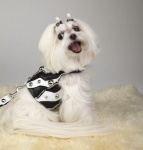 Zebra Graphics Harness
