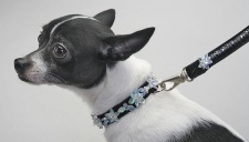 Mother-of-Pearl Luxe Leash