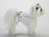 White Golden Grid Harness