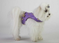 Lilac Golden Grid Harness