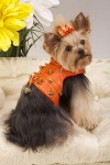 Golden Tangerine Harness