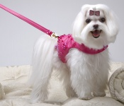 Hot Pink Princess Harness